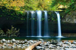 Ciclo del agua bosques húmedos templados