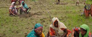 La-India-bate-un-récord-planta-66-millones-de-árboles-en-12-horas