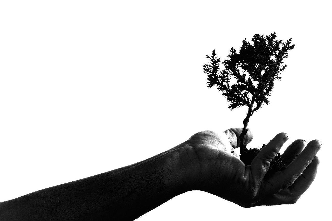 Guía básica para plantar un árbol
