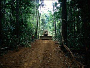 Carreteras selva amazónica