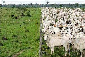agricultura intensiva amazonia